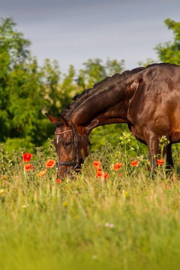 Retrato do cavalo nas flores foto de stock royalty free