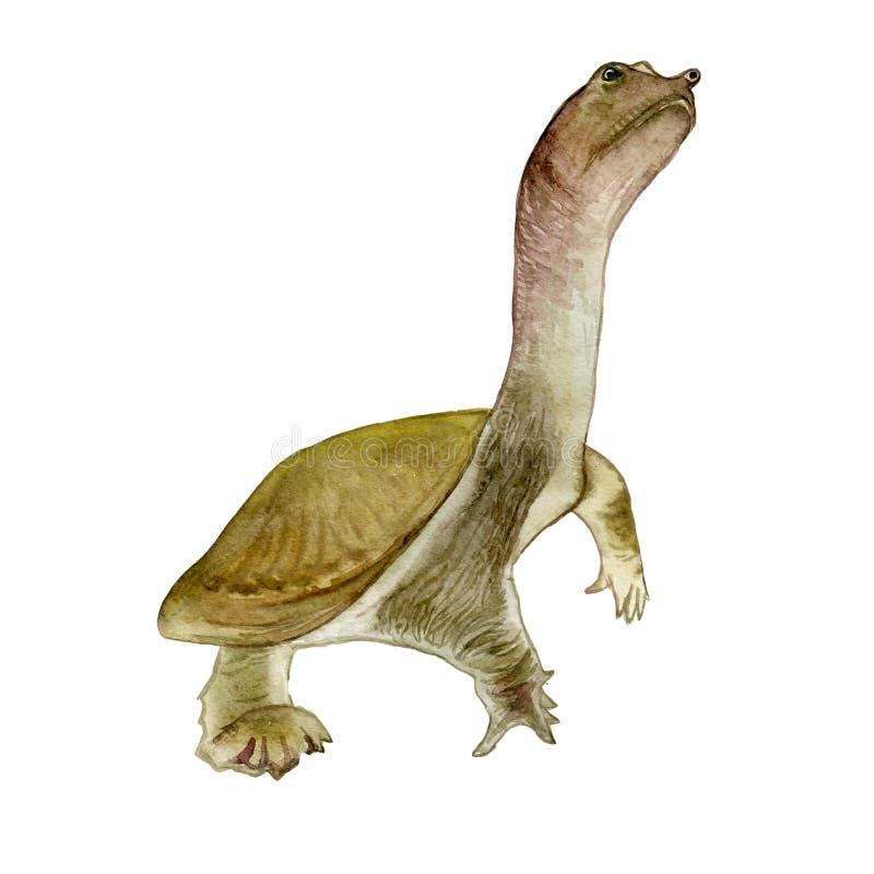 Retrato do close up da aquarela da tartaruga do softshell ou do sinensis chinês de Pelodiscus isolado no fundo branco Aquário tir ilustração royalty free