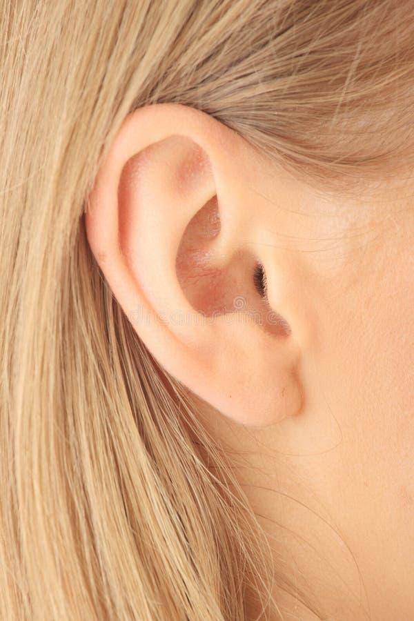 Retrato do close up da orelha loura da menina fotos de stock