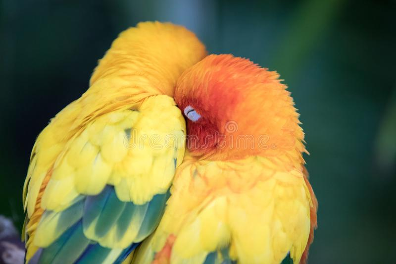 Retrato do close-up de um pássaro tropical colorido foto de stock royalty free