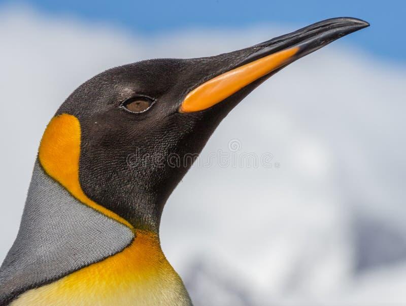 Retrato do close up do rei Penguin fotografia de stock royalty free