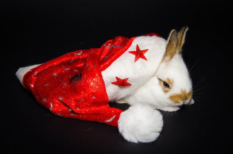 Retrato do coelho engraçado com chapéu do Natal foto de stock royalty free