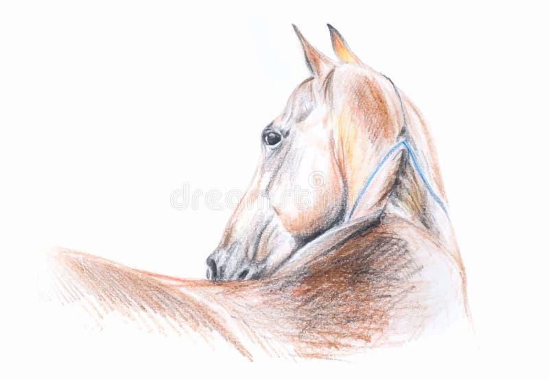 Retrato do desenho de lápis da cor do cavalo de Akhal-teke no formato do vetor ilustração do vetor