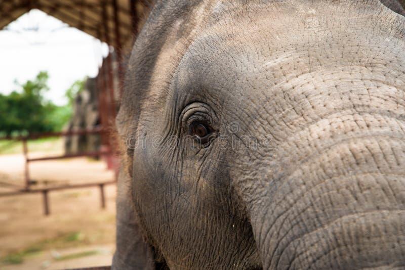 Retrato do elefante Elefante em um fundo da natureza Por do sol sobre um lago Cara do elefante imagens de stock