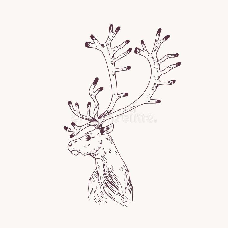 Retrato do esbo?o dos veados vermelhos, do cervo ou do veado masculino A cabe?a do animal selvagem gracioso com chifres entrega t ilustração do vetor