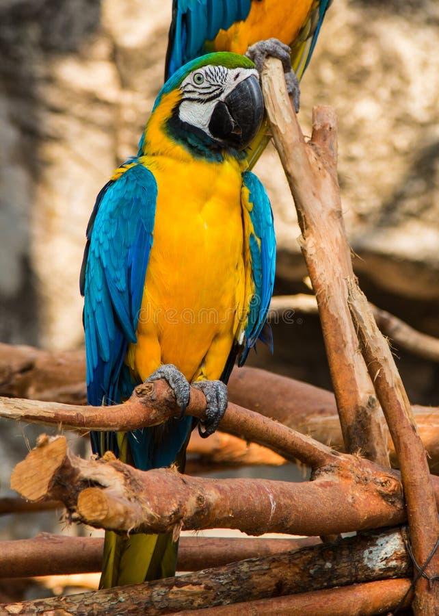 Retrato do escarlate colorido do papagaio da arara contra o fundo da selva ilustração do vetor