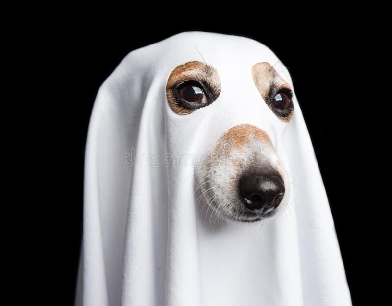 Retrato do fantasma de Dia das Bruxas C?o engra?ado no fundo preto foto de stock