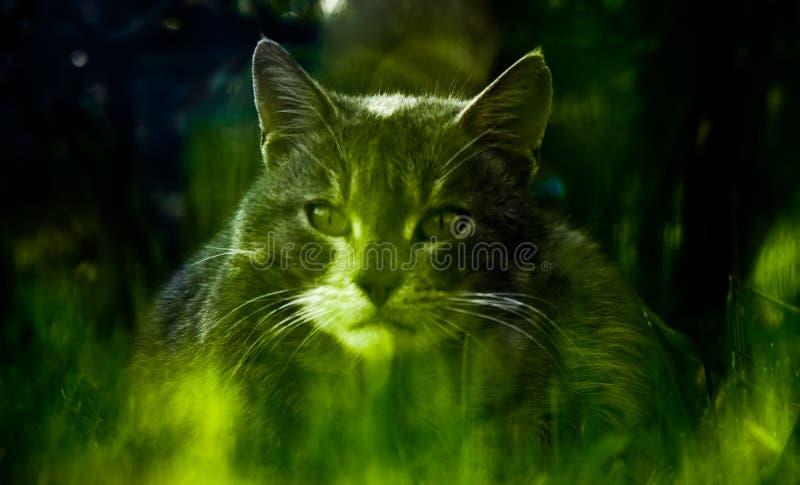 Download Retrato do gato imagem de stock. Imagem de closeup, cute - 12808325