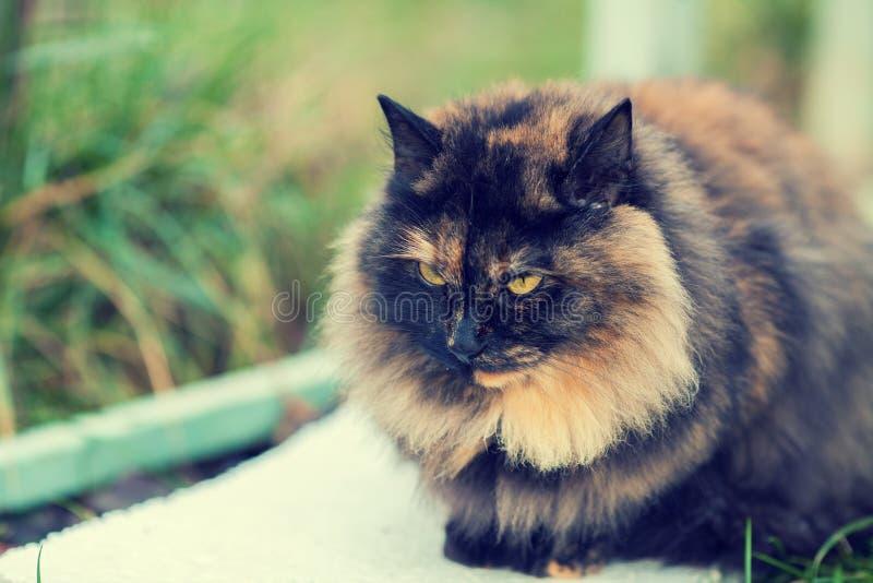 Retrato do gato de chita foto de stock