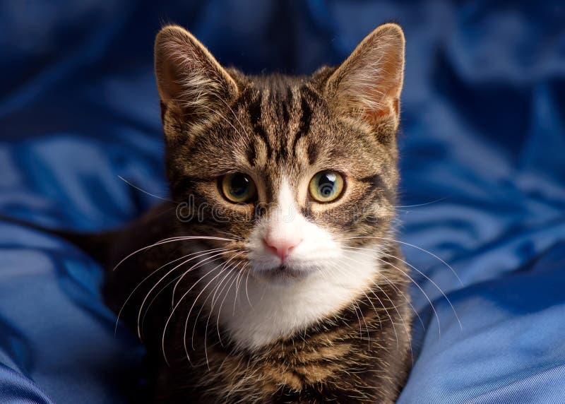 Retrato do gato malhado e do gatinho branco imagem de stock royalty free