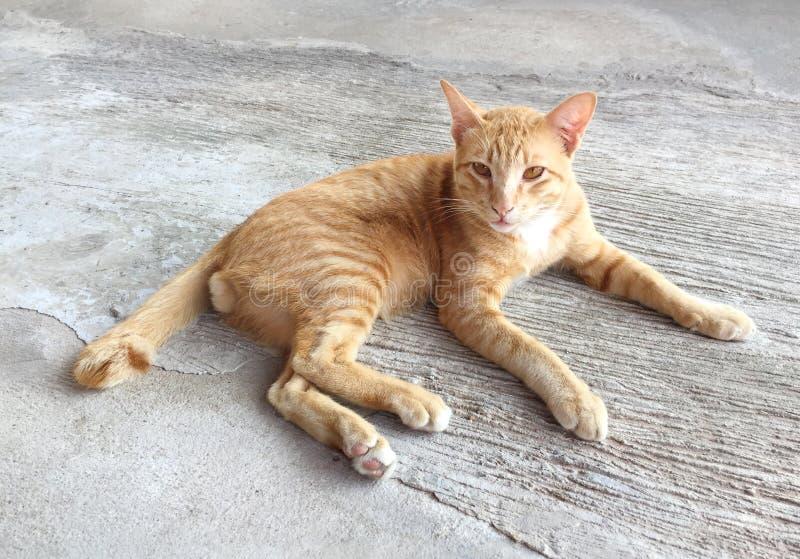 Retrato do gato vermelho feliz O gato da casa relaxa dentro a atividade Animal de estimação - instantâneo de Smartphone fotografia de stock royalty free