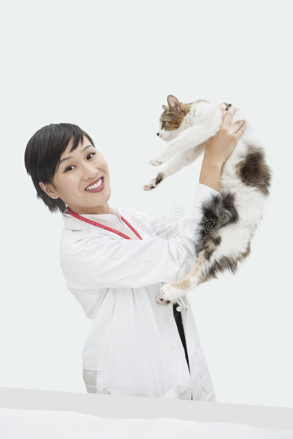Retrato do gato veterinário fêmea da sustentação contra o fundo cinzento foto de stock