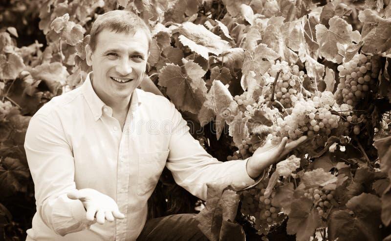 Retrato do homem alegre perto das uvas no vinhedo fotos de stock