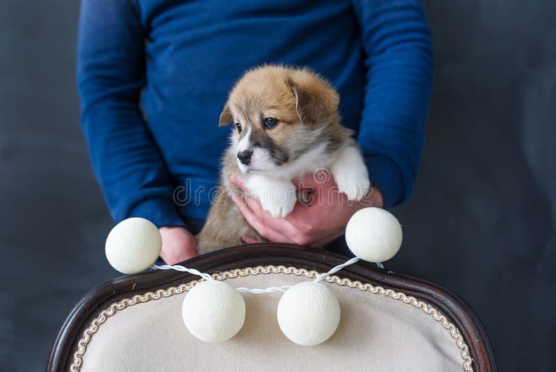 Retrato do homem e do cachorrinho pequeno no estúdio foto de stock royalty free