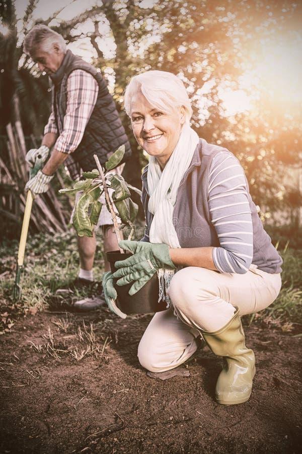 Retrato do jardineiro fêmea feliz com a planta em pasta no jardim imagens de stock