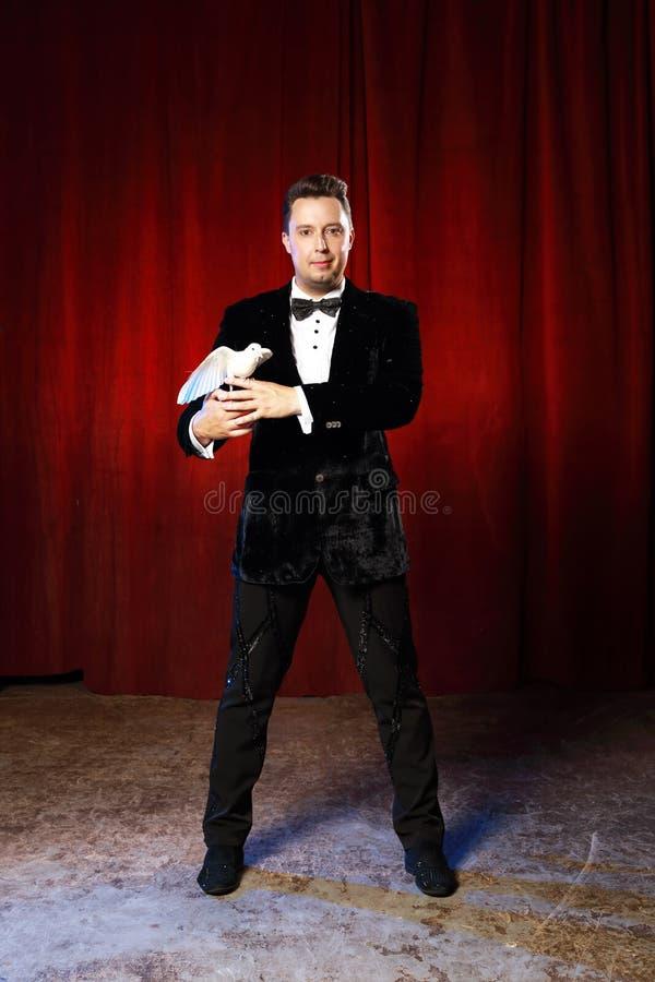Retrato do mágico com a pomba no circo imagens de stock