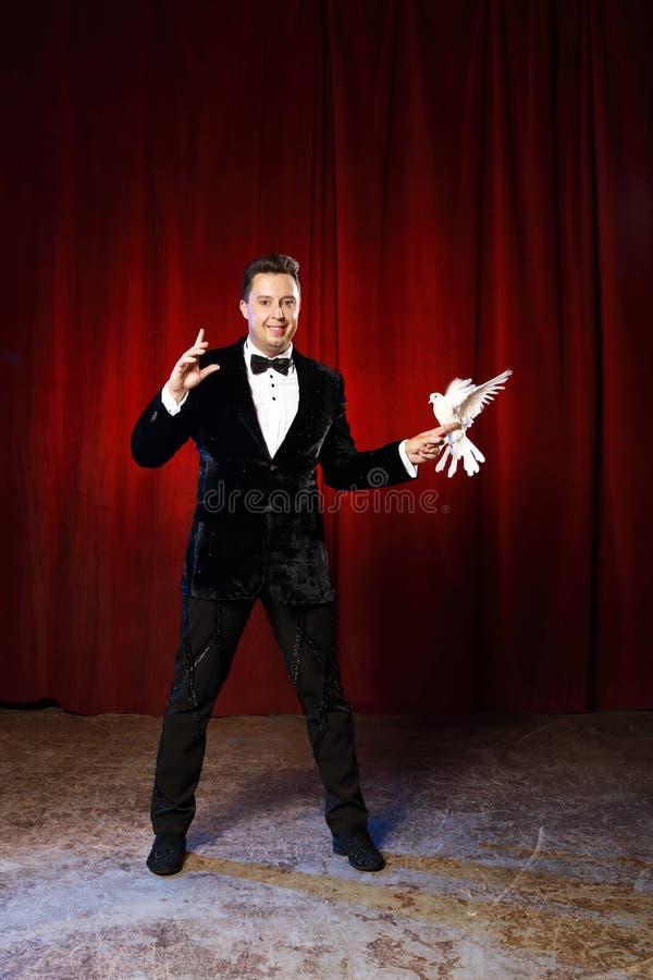 Retrato do mágico com a pomba no circo foto de stock