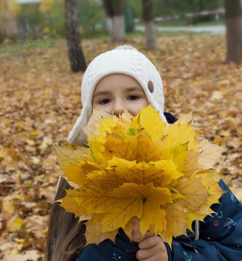 Retrato do outono da menina bonita com o ramalhete das folhas amarelas imagem de stock