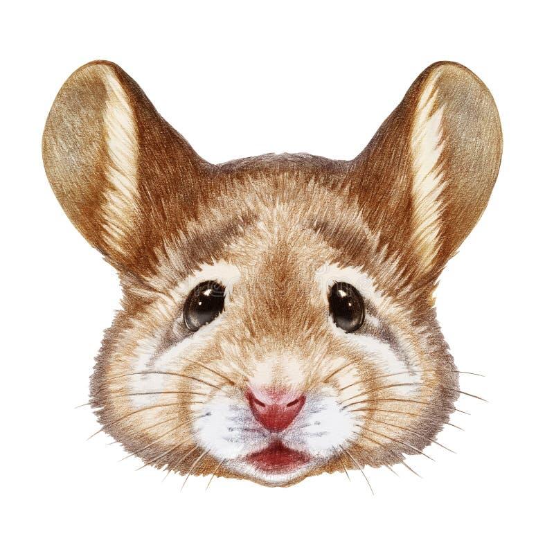 Retrato do rato ilustração royalty free