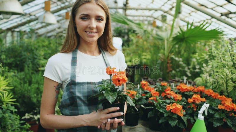 Retrato do trabalhador alegre do jardim da jovem mulher no avental que sorri e que guarda a flor nas mãos na estufa imagens de stock royalty free