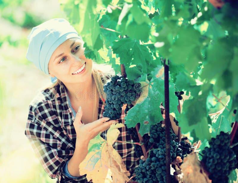 Retrato do trabalhador fêmea adulto na exploração agrícola da uva foto de stock