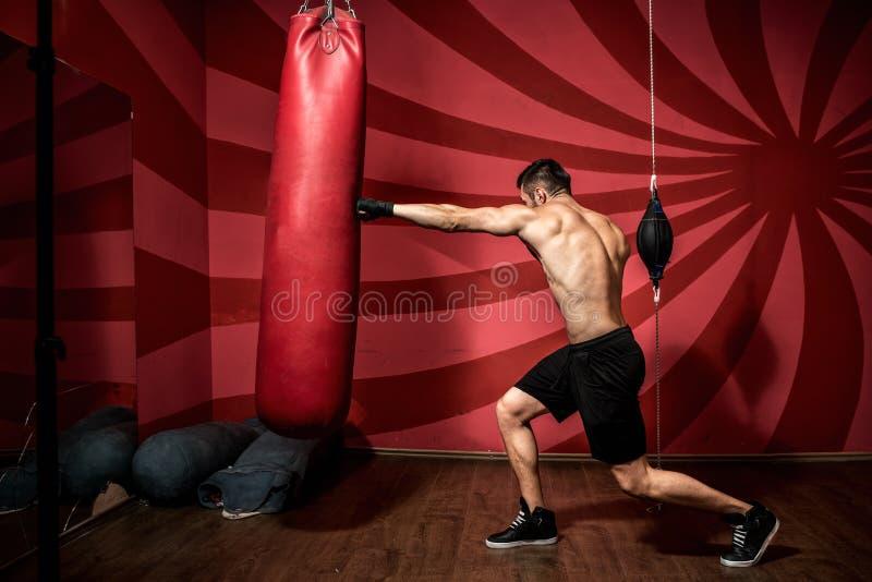 Retrato do treinamento masculino do pugilista com luvas e descamisado Treinamento do encaixotamento imagem de stock