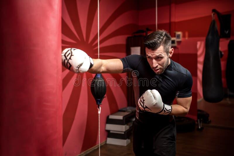 Retrato do treinamento masculino do pugilista com luvas e equipement do encaixotamento imagens de stock