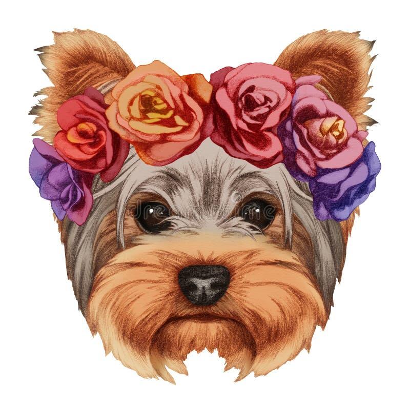 Retrato do yorkshire terrier com a grinalda principal floral ilustração royalty free