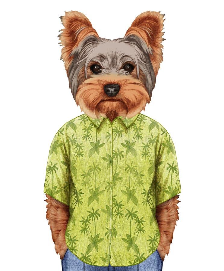 Retrato do yorkshire terrier na camisa do verão ilustração stock