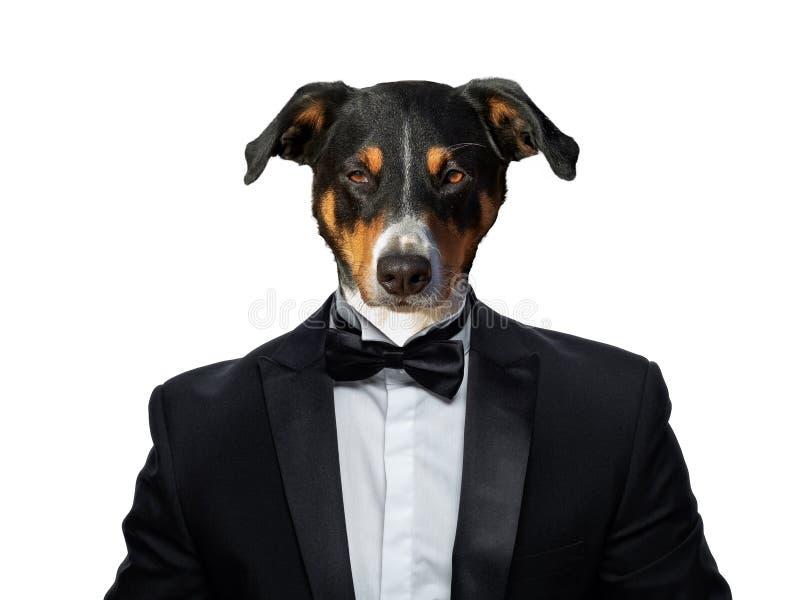Retrato dos cães em um terno de negócio foto de stock royalty free
