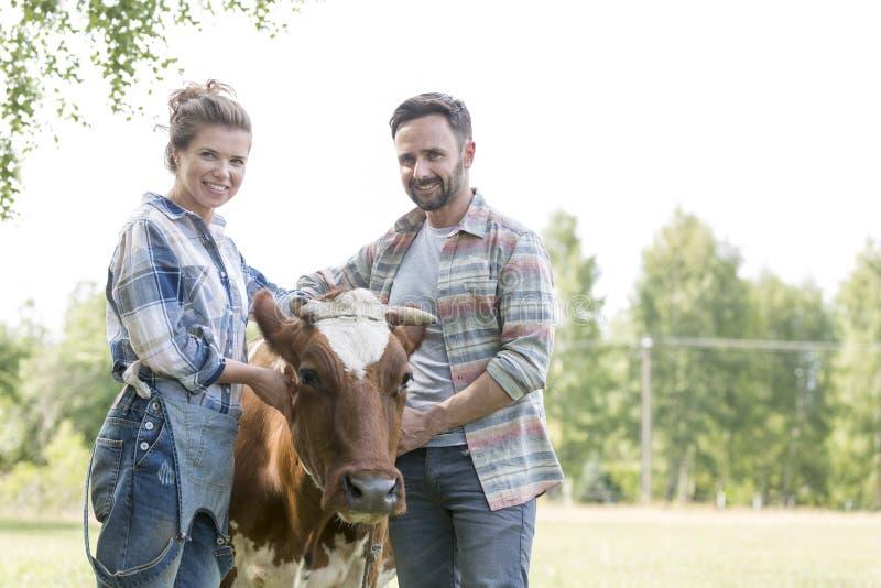 Retrato dos pares de sorriso que estão com a vaca na exploração agrícola foto de stock royalty free