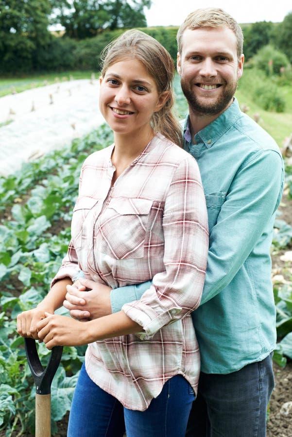 Retrato dos pares que trabalham no campo de exploração agrícola orgânico imagens de stock royalty free