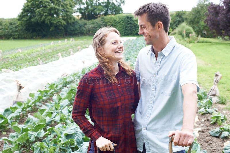 Retrato dos pares que trabalham no campo de exploração agrícola orgânico imagens de stock