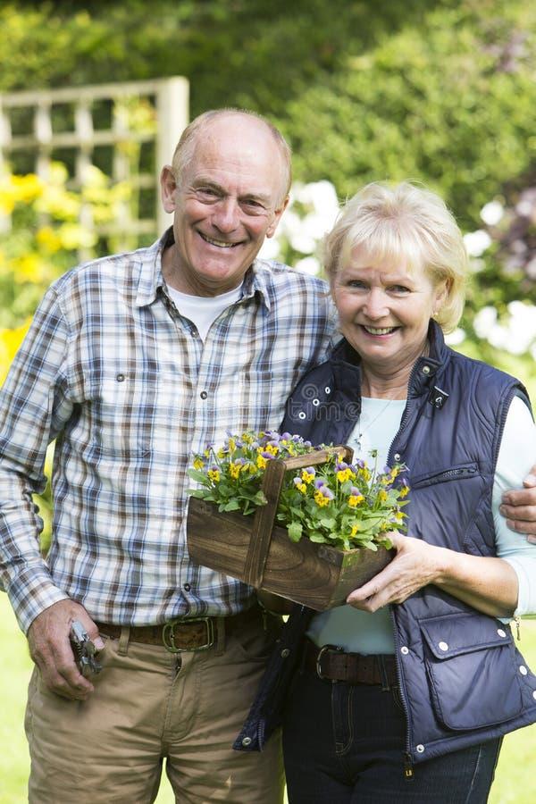 Retrato dos pares superiores que trabalham no jardim junto foto de stock