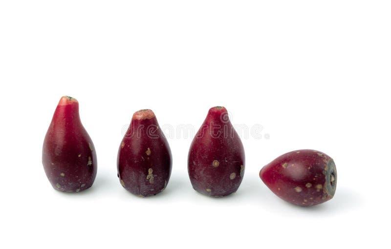 Retrato dos vegetais imagem de stock
