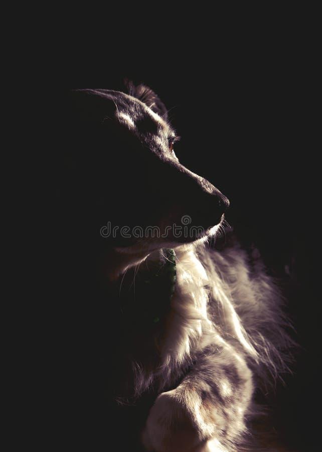 Retrato dramático del perro fotos de archivo libres de regalías