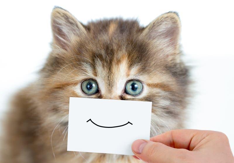 Retrato engraçado do gatinho com sorriso no cartão imagem de stock royalty free