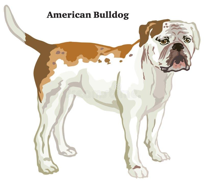 Retrato ereto decorativo colorido da ilustração americana do vetor do buldogue ilustração stock