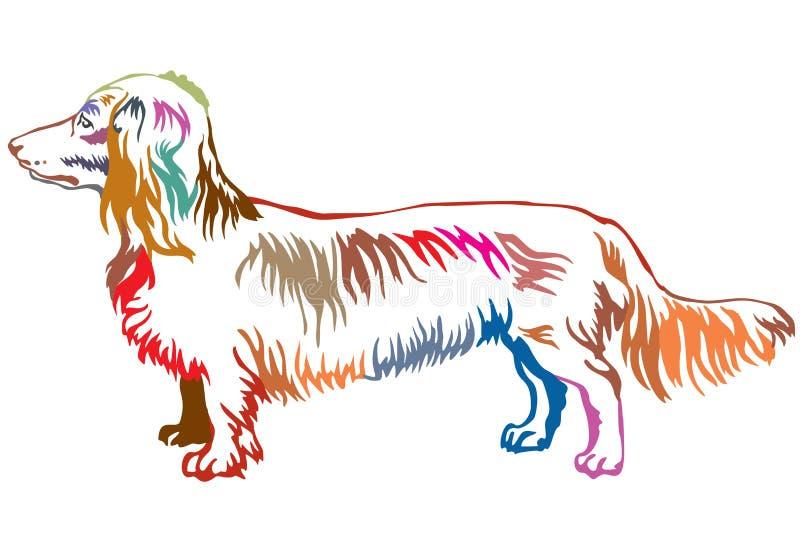 Retrato ereto decorativo colorido do cão Dachshu de cabelos compridos ilustração stock