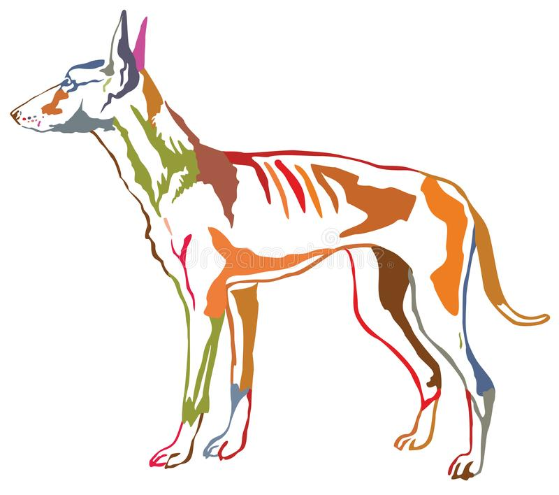 Retrato ereto decorativo colorido do cão VE de Podenco Ibicenco ilustração royalty free