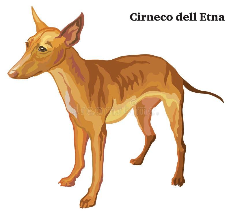 Retrato ereto decorativo colorido do dell Etna VE de Cirneco do cão ilustração stock