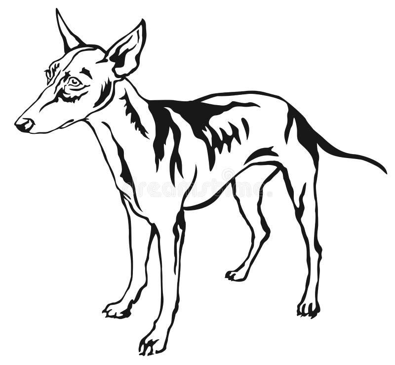 Retrato ereto decorativo do mal do vetor de Etna do dell de Cirneco do cão ilustração do vetor