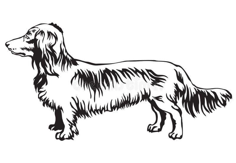 Retrato ereto decorativo do vetor de cabelos compridos do bassê do cão ilustração do vetor