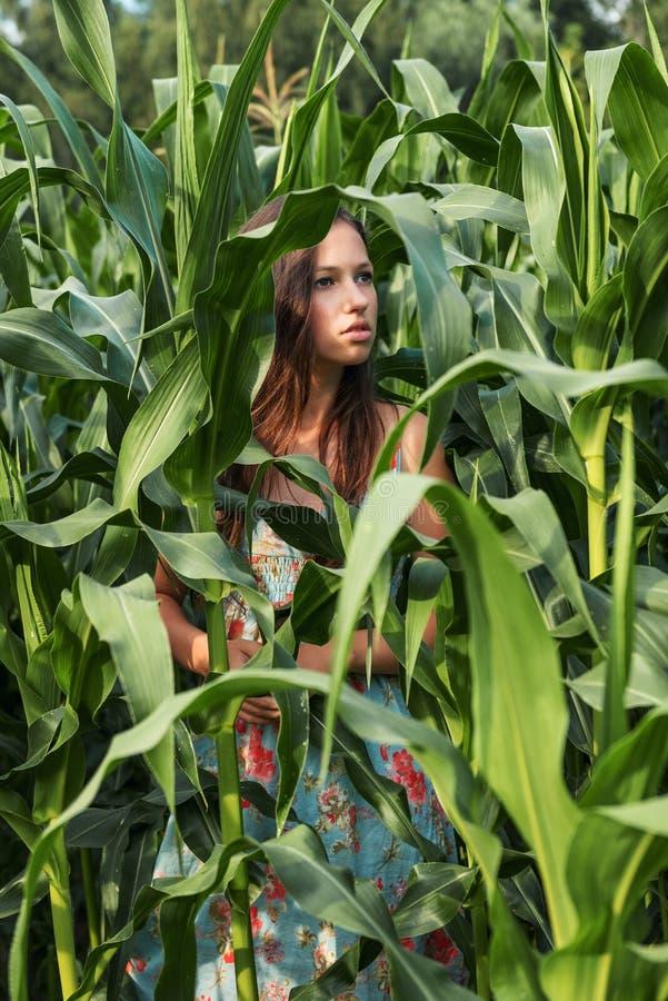 Retrato escuro de um adolescente em um campo de milho entre plantas e as folhas enormes imagens de stock