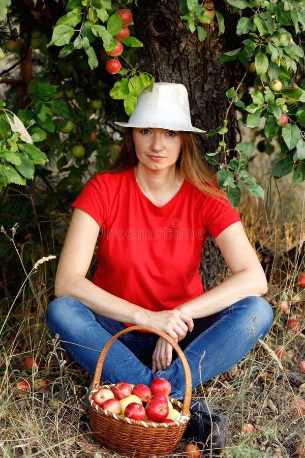 Retrato fêmea do ar livre Uma mulher de meia idade feliz senta-se sob uma árvore em um pomar de maçã perto de uma cesta completa  fotos de stock royalty free