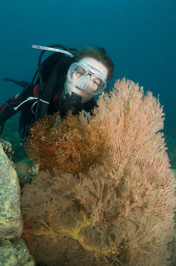 Retrato fêmea novo do mergulhador de mergulhador imagens de stock