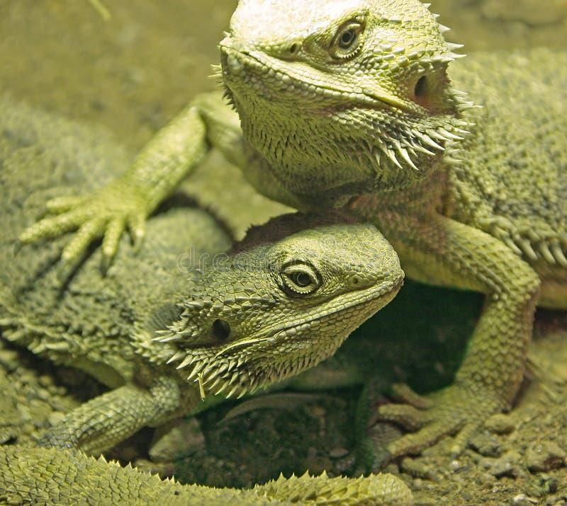 Retrato farpado do dragão fotografia de stock