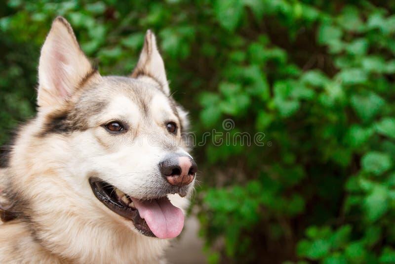 Retrato fornido feliz en fondo verde de las hojas Perro al aire libre imagen de archivo