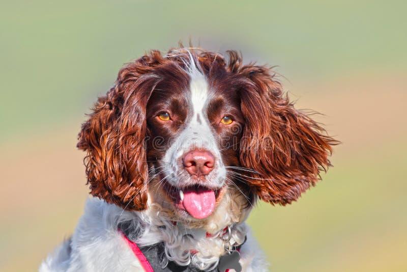 Retrato hermoso del perro imagenes de archivo