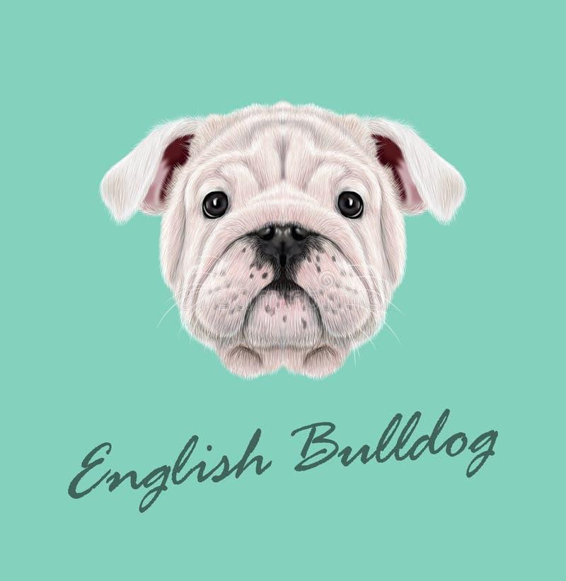 Retrato ilustrado vetor do cachorrinho inglês do buldogue ilustração do vetor
